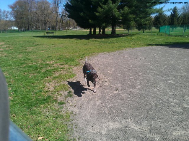 1st dogs entering the park