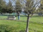 swpawspark-cleanup-2012-6